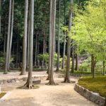 櫟苑の樹木葬地全景