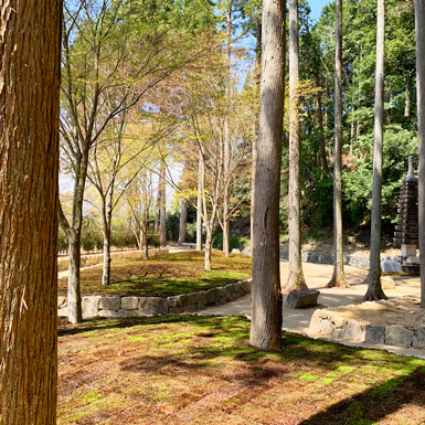 杉木立の墓苑の風景