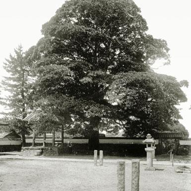 開祖伝教大師様が霊夢を感じた櫟の木
