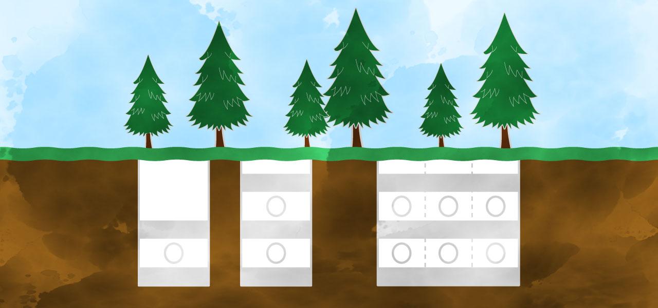 樹木葬の埋葬の断面イラスト