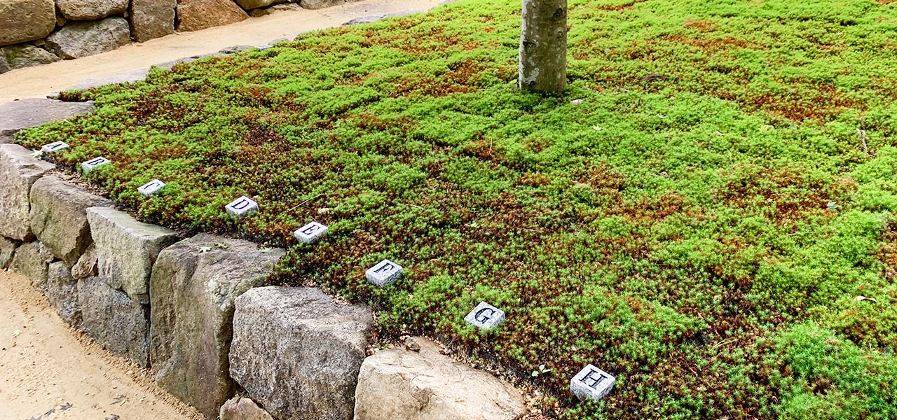 櫟野寺樹木葬の納骨イメージの断面図